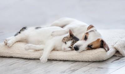 マットの上で一緒に眠る犬と猫