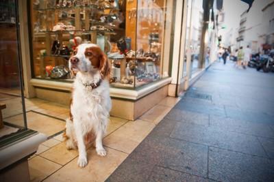 店の前で座る犬
