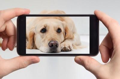 スマートフォンで撮られる犬