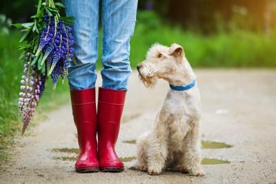 飼い主と並んでいる犬