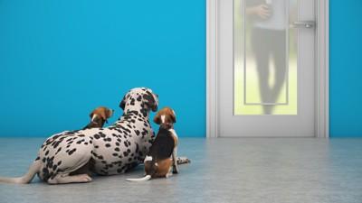 ドアの前で飼い主を待つ犬たちの後ろ姿