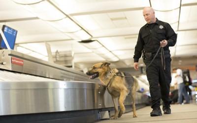 空港で働くシェパード