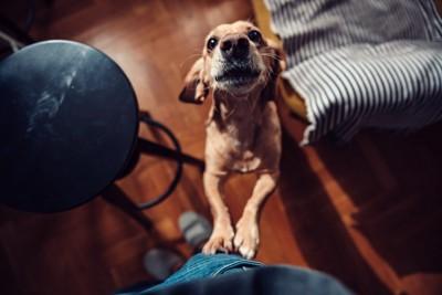 前脚をかけて見つめる犬