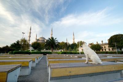 トルコのモスクをバックにした野良犬