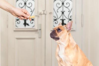 動物病院でおやつを犬に与える