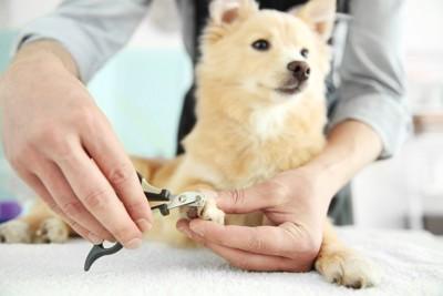 犬の爪切り、手元のアップ