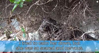 藪に隠れる犬