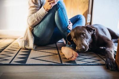 カーペットの上に座る飼い主に寄り添う犬