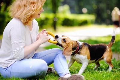 おもちゃで遊ぶ女性と犬
