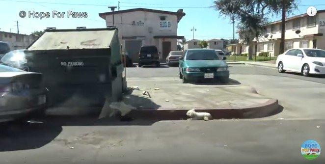 道路脇に横たわる犬