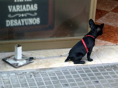 外に繋がれている犬