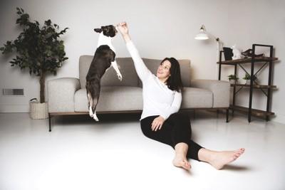 ジャンプする犬と飼い主