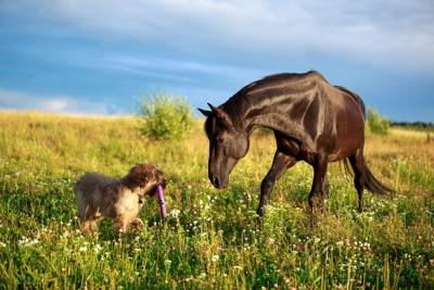 馬とおもちゃを咥えた犬