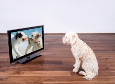 2頭の犬が映るテレビ画面を座って見ている犬