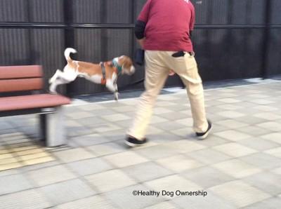 トレーニングをしている犬と人