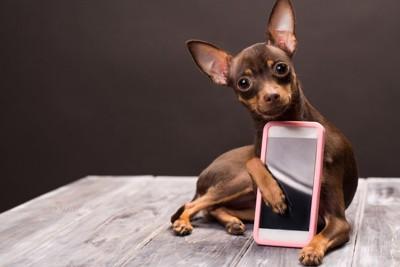 スマホを抱えた小型犬