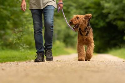 男性の横を歩く茶色毛の犬