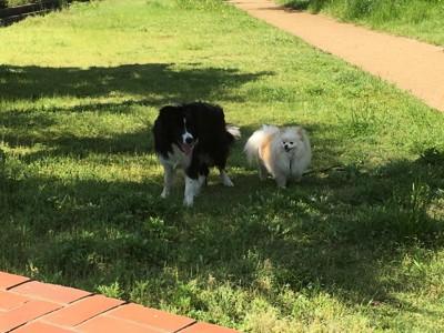 散歩中の犬たち
