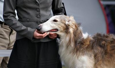 飼い主とボルゾイの横顔