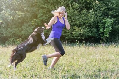 走る女性に飛びつこうとするボーダーコリー
