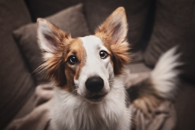 白茶のミックス犬
