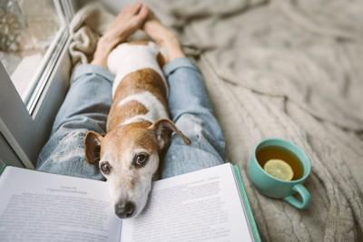 飼い主さんが読んでいる本にあごを乗せる犬