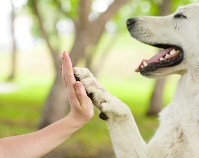 飼い主と手を合わせる犬