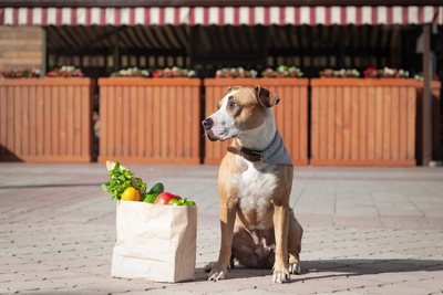 野菜が入った紙袋と犬