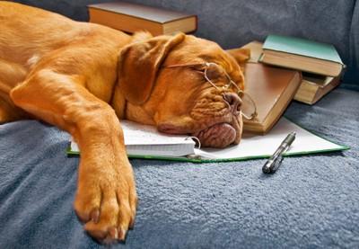 勉強しながら寝ている犬