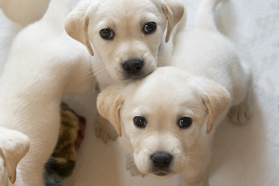 こちらを見つめる二匹の子犬