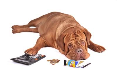 計算機に手を置いてうなだれている犬
