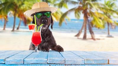 ジュースを飲む犬