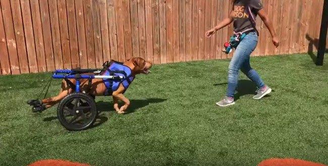 人を追いかける犬