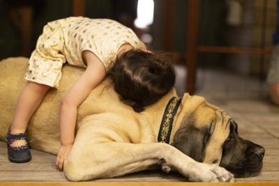 抱きしめられて嫌そうな犬