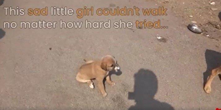 歩けない子犬