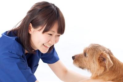 犬に笑いかける女性、白い背景