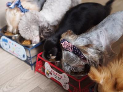 ドッグフードを食べている犬