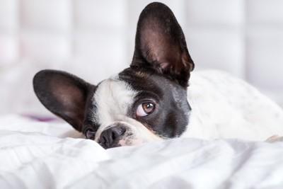 興味深そうな表情の犬