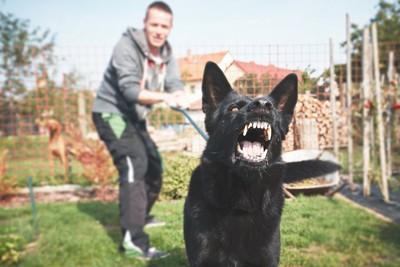 吠える黒い犬とリードを引っ張る飼い主