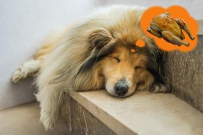 鳥肉を夢見る犬