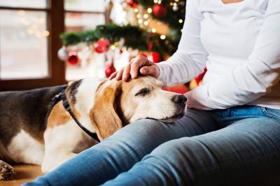 飼い主の足に顔を乗せて撫でられている犬