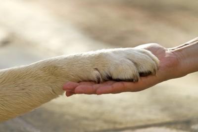 人の手に乗せられた犬の手