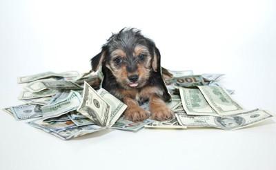 お金に埋もれる犬