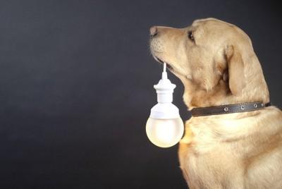 電球をくわえる犬