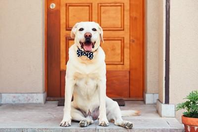 ドアの前に座るラブラドール