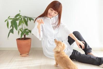 交流を楽しむ女性と犬