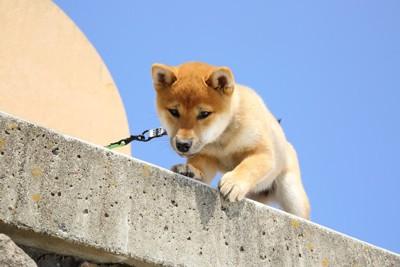 高い場所で怯える子犬