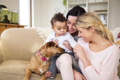 ソファーの上で飼い主さん家族に寄り添う犬