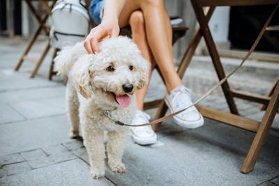 カフェを利用する飼い主の足元にいる犬