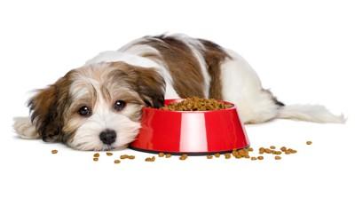 食欲のない犬とドッグフード